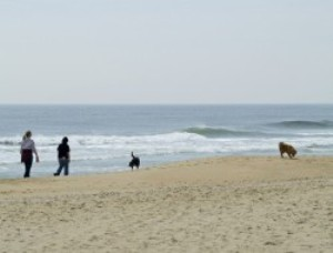 cape cod dog friendly beaches