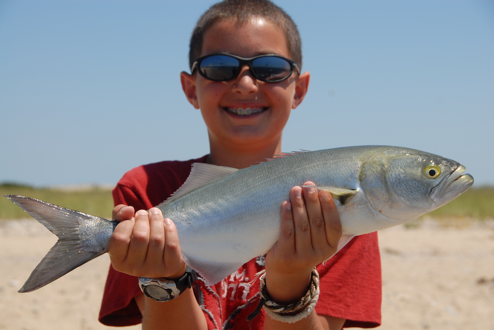 Cape Cod Bluefish